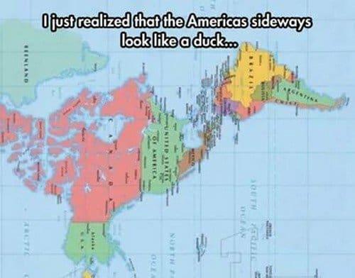 americas duck