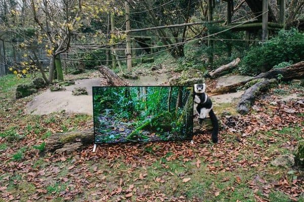 animal holding tv