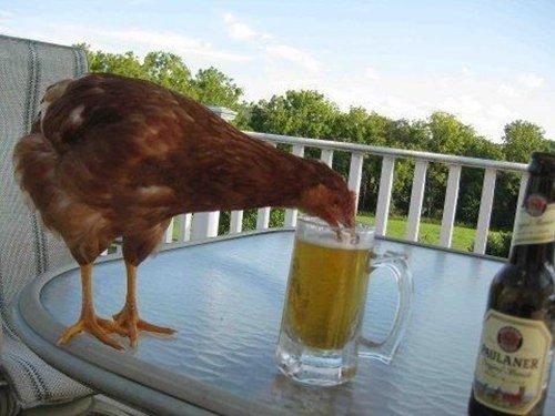 animal-jerks-beer