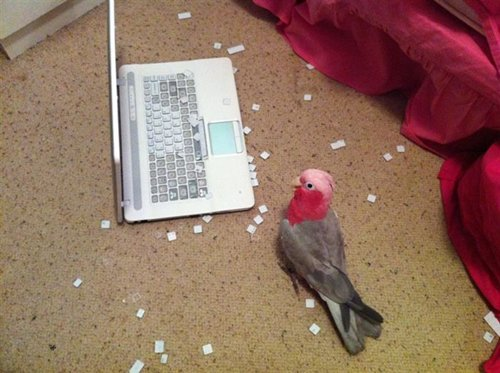 animal-jerks-bird