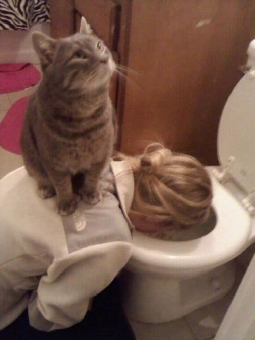 animal-jerks-cat
