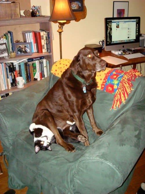 animal-jerks-doge