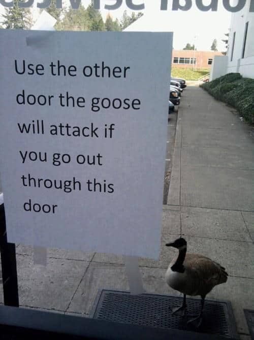 animal-jerks-goose