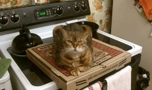 animal-jerks-pizza