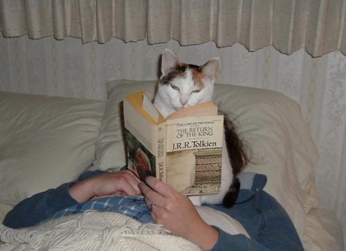animal-jerks-reading