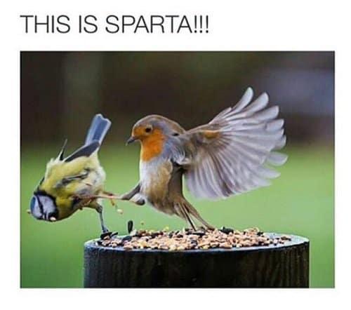 animal-jerks-sparta