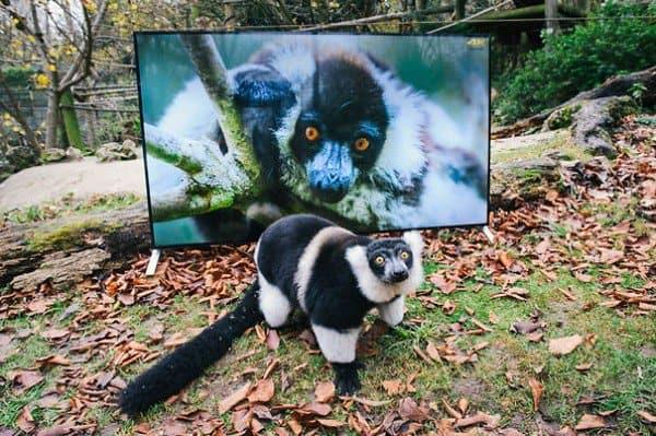 animal self tv
