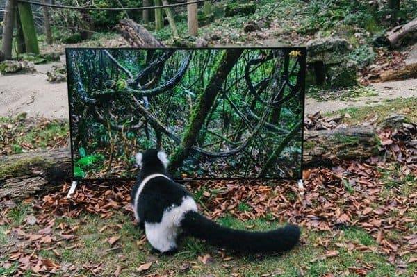 animal watching tv