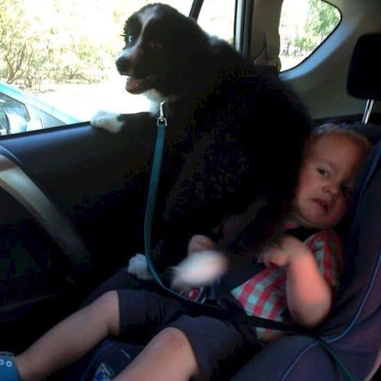 animals-car-seat