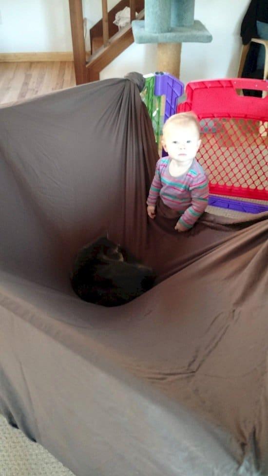 animals-cat-sheet