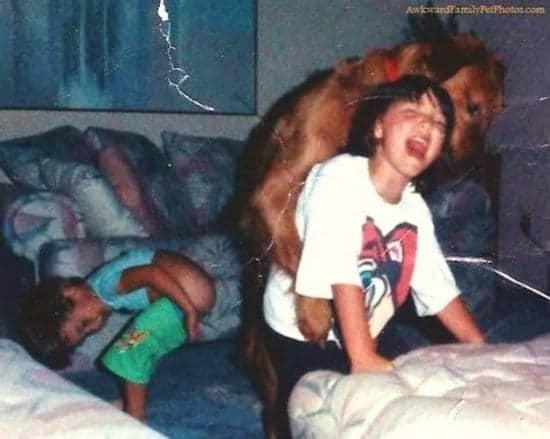 animals-dog-2