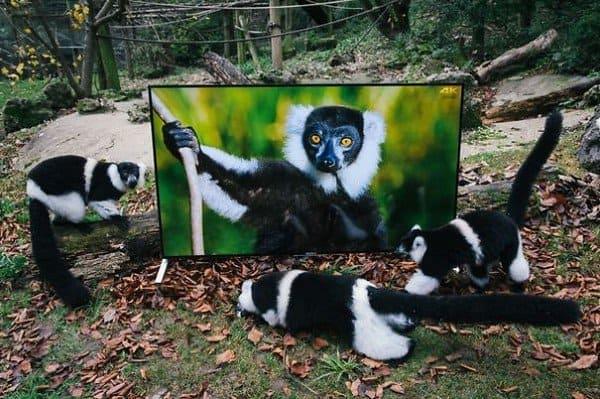 animals round tv