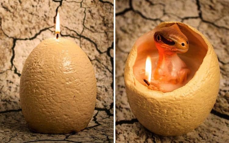 candle-hatching