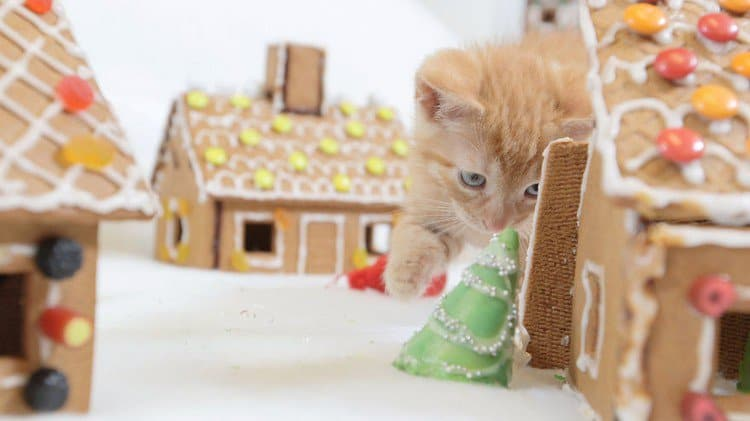 cat gingerbread house