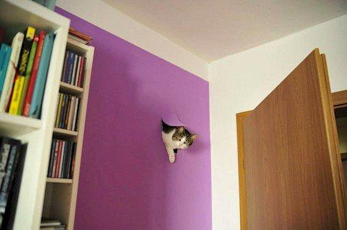 cat hole wall