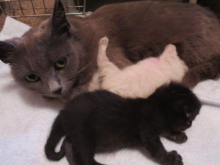 cat-kittens]