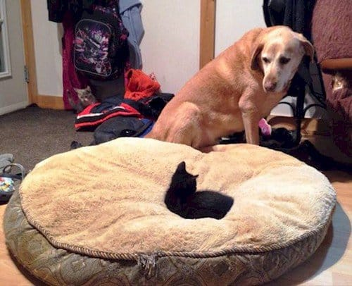 cat on dog bed