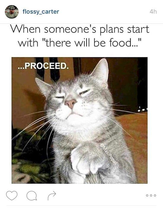 cat will be food