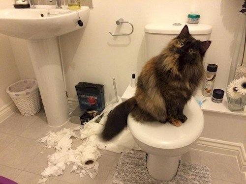 cat wrecked toilet paper