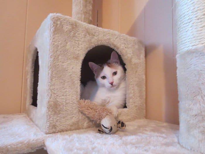 cats-house