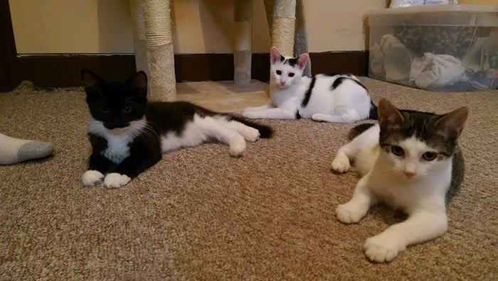 cats-three