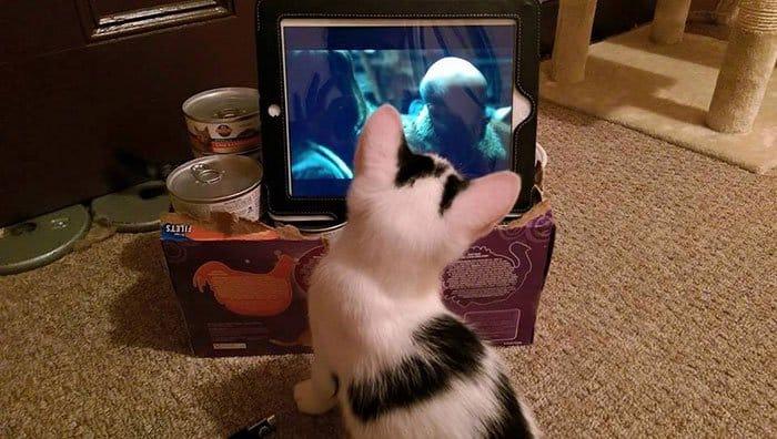 cats-tv