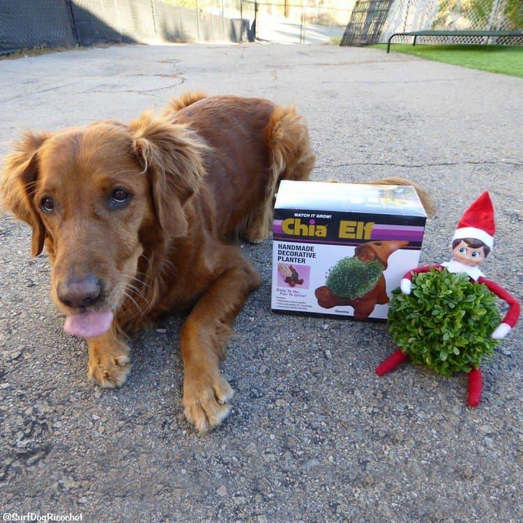 chia elf and dog