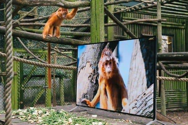 climbing monkey tv