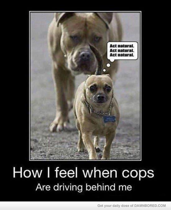 cops driving