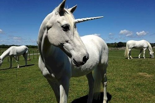 crazy-facts-unicorn