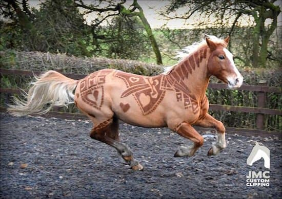 custom-horse-clipping-top