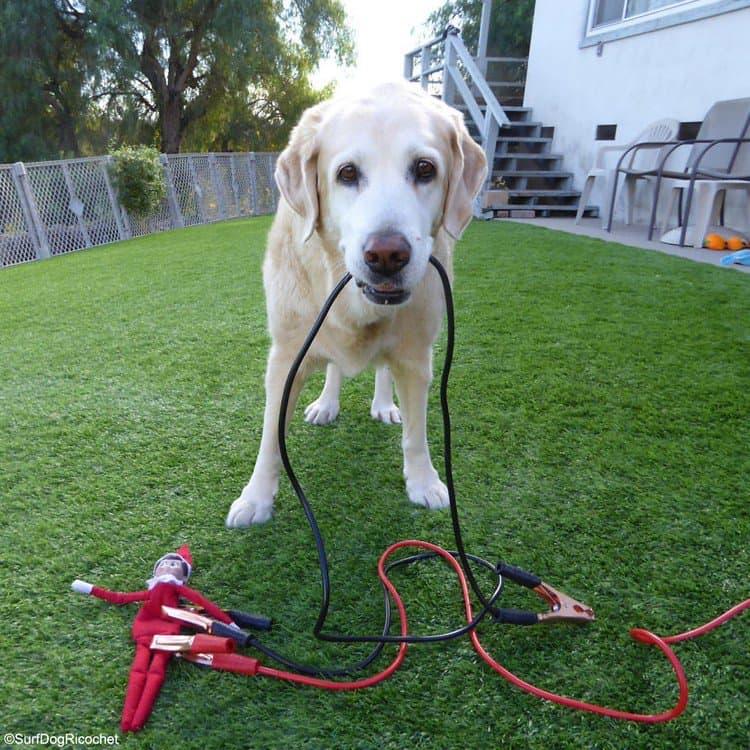 dog electro elf