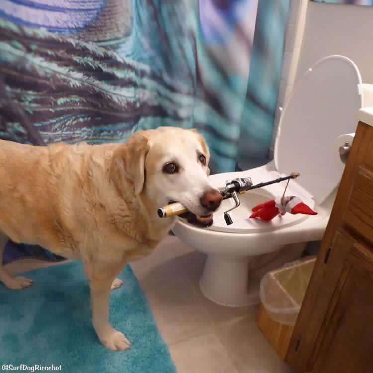 dog fishing elf toilet