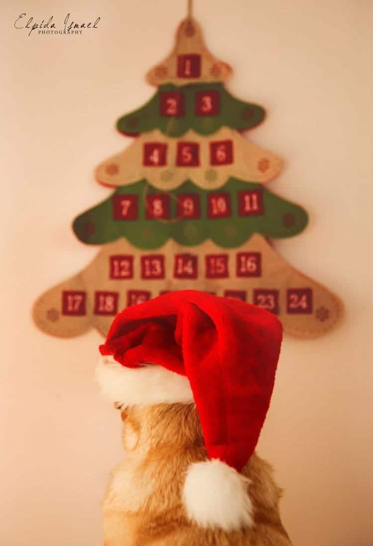 dog hat calendar