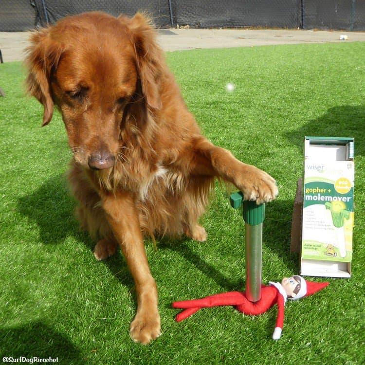dog removing elf