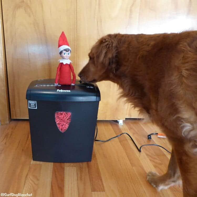 dog shredding elf