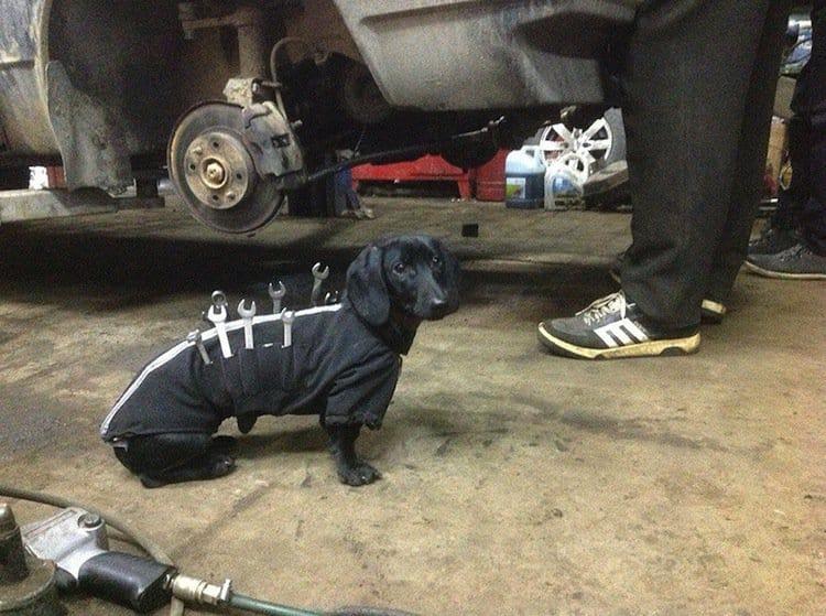 dog-tools