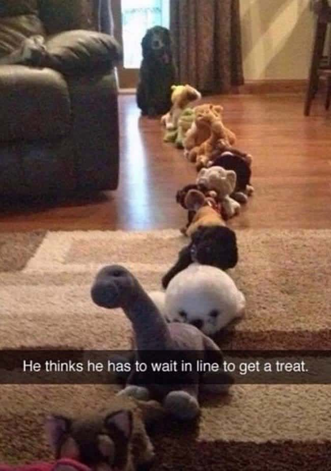 dog waiting in line