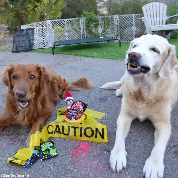 dogs elf caution