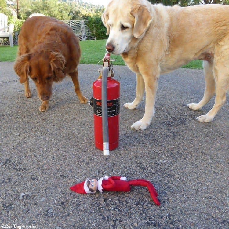 dogs extinguisher elf