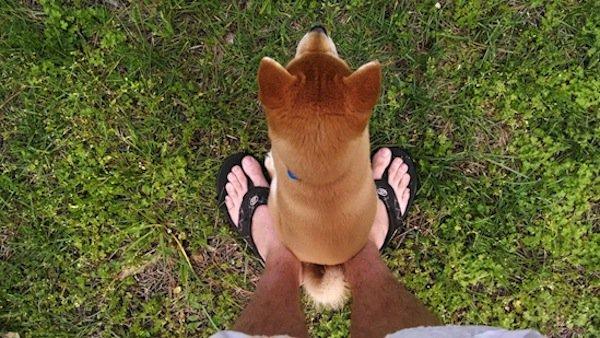 dogs-sitting-feet
