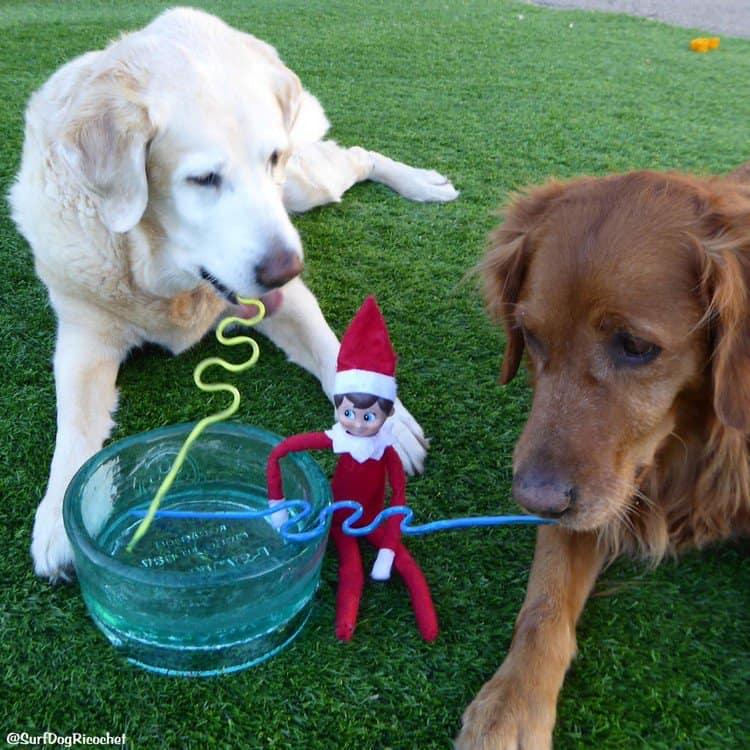 dogs straw elf