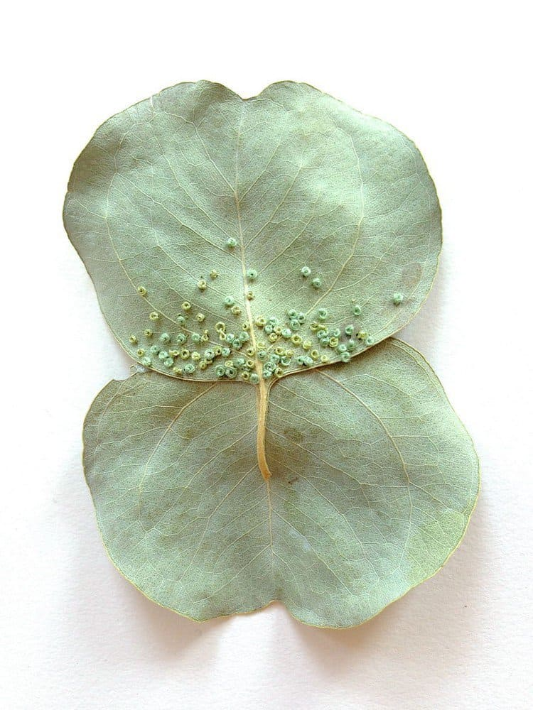 dotty embroidered leaf art