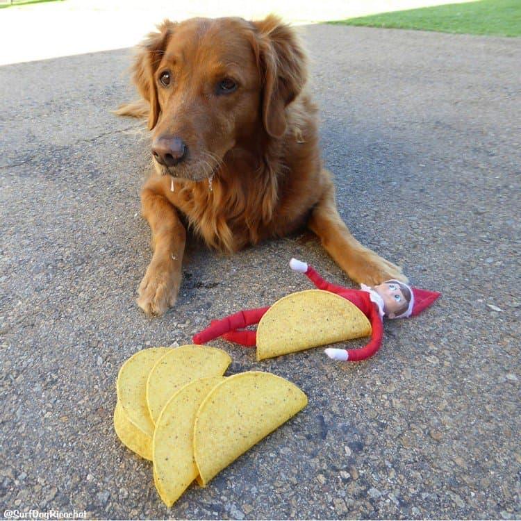 elf tacos dog
