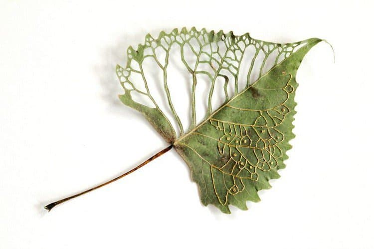 embroidered leaf art up close