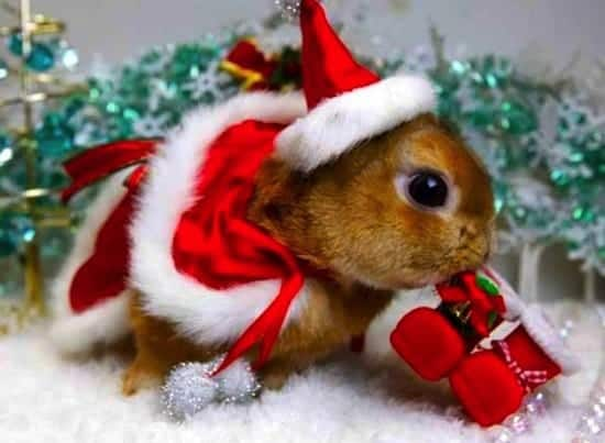 festive-animal
