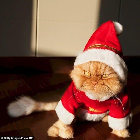 festive-cat-xmas