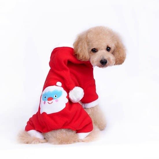 festive-dog