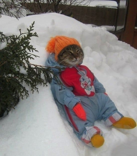 festive-feline