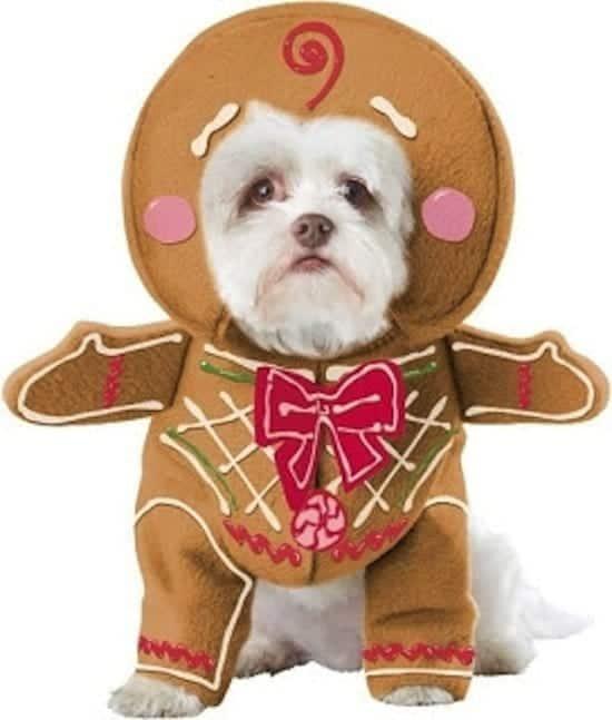 festive-gingerbread-dog